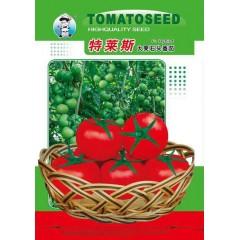 广州农源 特莱斯大果石头番茄种子 结果率强 高产 果实大 肉厚 色泽鲜红亮丽 耐贮运 番茄种子 1克装