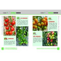 广州乾农 红艳樱桃番茄 无限生长型 早生 单果重14g 果实长椭圆形 糖度可达9.8% 不易裂果 耐储运 1克装 番茄种子