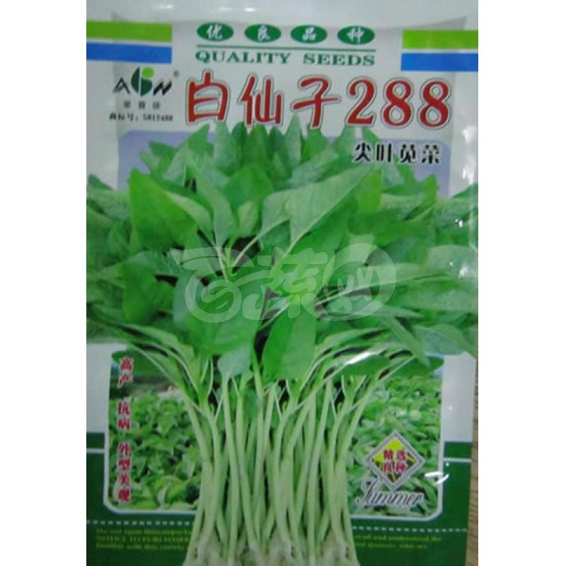 广东爱普农 白仙子288尖叶苋菜种子 早熟 淡绿色 白梗 纤维少 无公害蔬菜品种 苋菜种子 200克装
