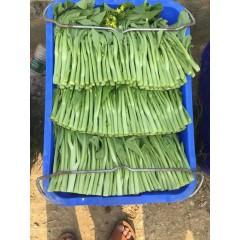 连州丰裕 丰裕2号连州菜心种子 早熟 耐热 苔叶尖披针形 亩产3500斤 菜心种子 10克装