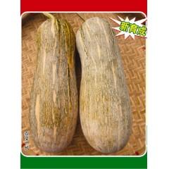 广东粤蔬 蜜本3号南瓜种子 广东农科院选育 早熟 连续坐果强 南瓜种子 40克/罐