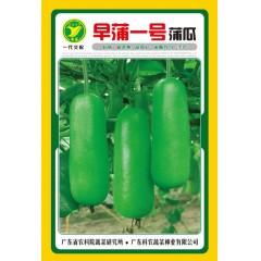 广东粤蔬 早蒲一号蒲瓜种子 广东省农科院选育 极早熟 瓜长25厘米左右 蒲瓜种子 10克装