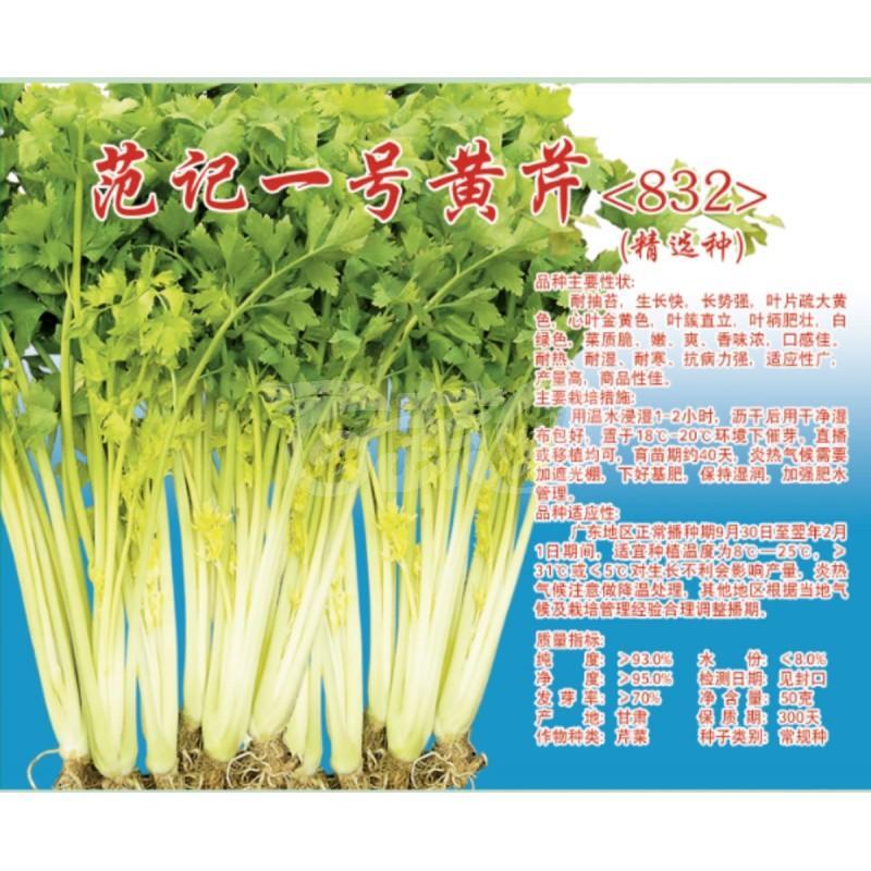 深圳范记 范记一号832黄芹种子 耐抽苔 抗病力强 产量高 黄芹种子 瓶装 50克罐装