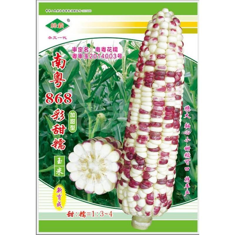广州绿霸 南粤868彩甜糯玉米种子 甜糯比例1:3.糯中带甜 甜中有香 香脆可口 冷食不返生 甜度好 玉米种子 200克装