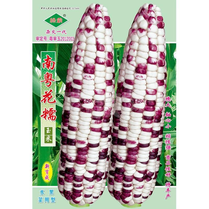 广州绿霸 南粤花糯玉米种子 穗大 轴心小 糯性强 商品性好 特丰产 玉米种子 200克装
