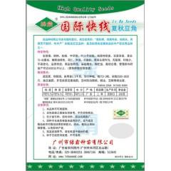 广州绿霸  国际快线油青豆角 春秋型 中早熟 耐热 抗病 荚多 花仁  200克装