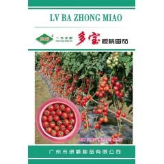 广州绿霸 多宝樱桃番茄种子 无限生长型 鲜红亮丽 果实正圆形 单果重18-25克 耐裂果 糖度高 硬度好 特耐贮运 番茄种子 300粒装