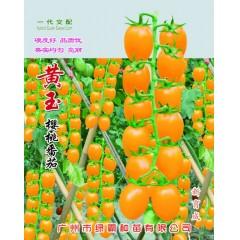 广州绿霸 黄玉樱桃番茄 株型美观 熟果黄色亮丽 果半椭圆形 单果重15-18克 耐裂果 嫩度好 糖度高 番茄种子 1克装