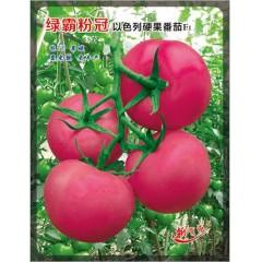 广州绿霸 绿霸粉冠番茄种子 无限生长型 抗TY 熟果粉红亮丽 单果重250克左右 果实坚硬 一致性好 耐裂果 亩产可达10000公斤以上 番茄种子 1000粒装