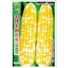 广州绿霸 金镶玉甜8号种子 耐热 耐湿 糖度高 丰产 脆嫩香甜 风味极佳 较耐贮运 产量高 玉米种子 200克装