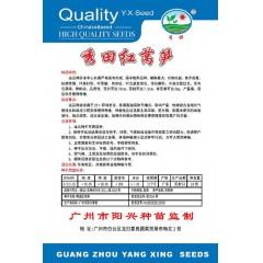 广州阳兴 秀田红莴笋种子 抗病 高产 商品性好 红莴笋种子 10克装