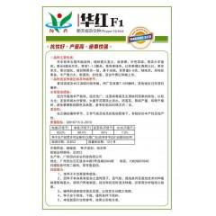广州阳兴 华红朝天椒种子 新包装 座果性强 熟果大红色 果长7-8厘米 辣椒种子 5克装